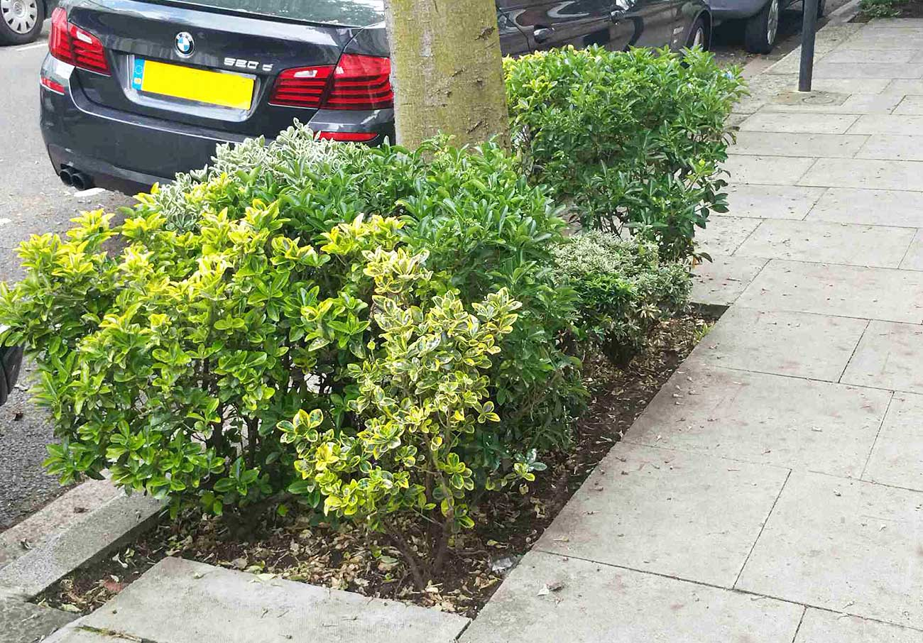 Residents welcome to plant flowers under trees in new council scheme